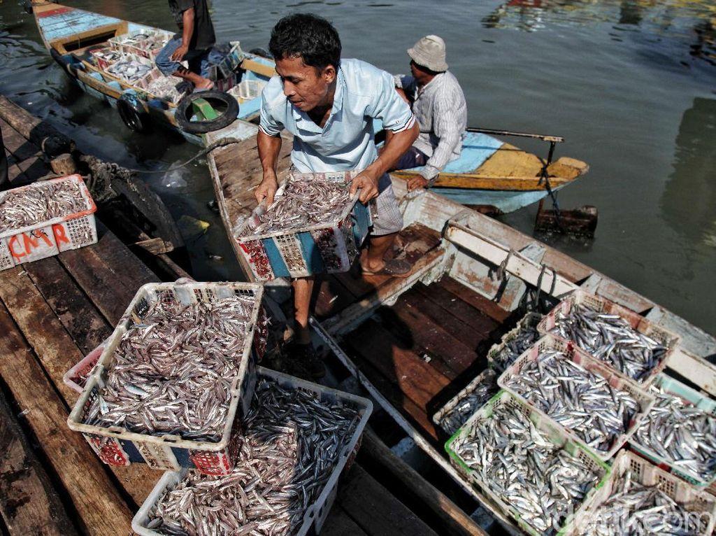 Sebentar Lagi Jakarta Akan Punya Pasar Ikan Seperti di Jepang