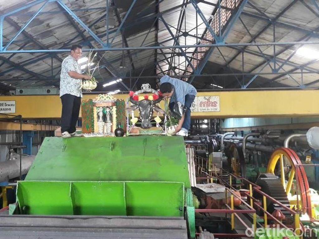 Persembahan Kepala Kerbau, Awali Musim Giling PG Soedhono Ngawi
