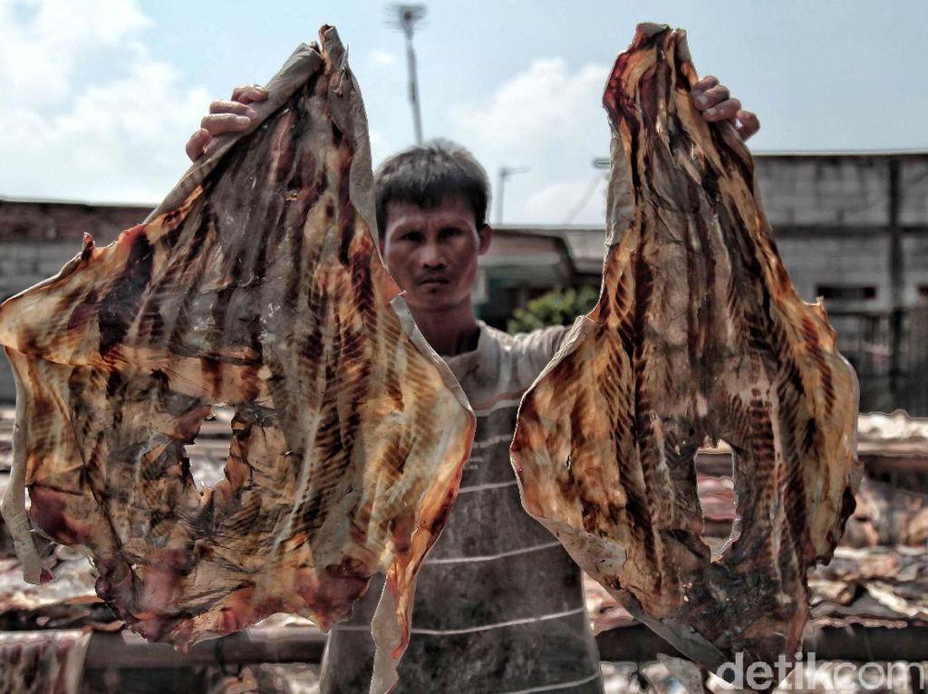 Melihat Pemotongan dan Penjemuran Ikan Hiu