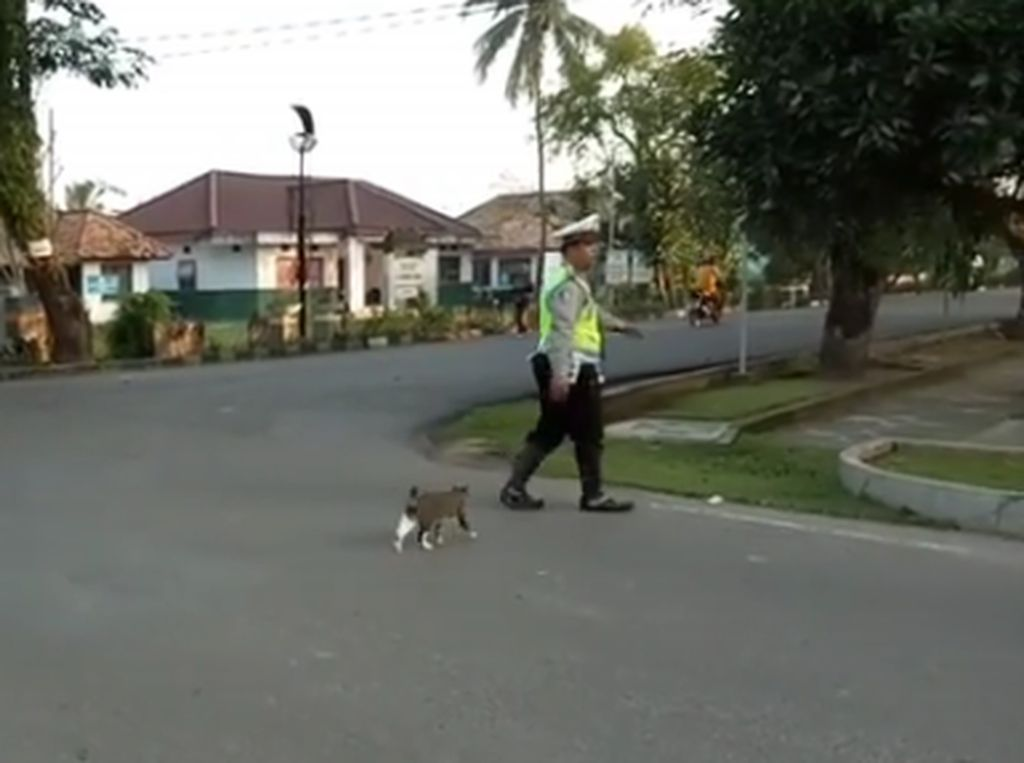 Viral Polisi Bantu Kucing Menyeberang, Ini Cerita di Baliknya