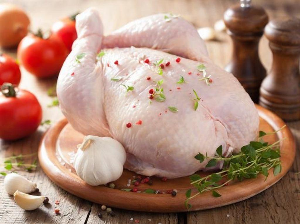 Ini Beda Ayam Kampung, Ayam Jantan dan Ayam Negeri