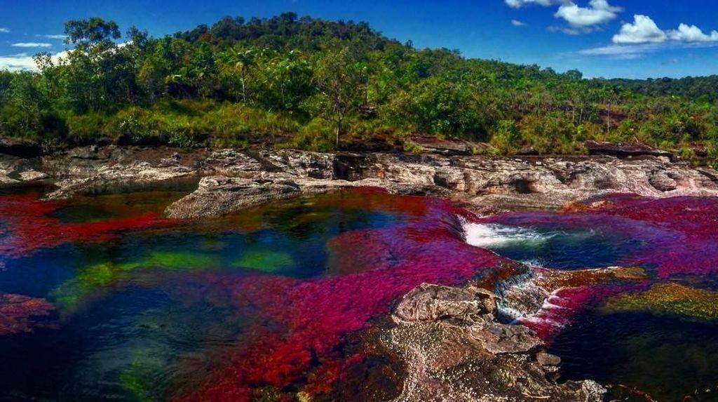 Foto: Sungai 5 Warna Sungguhan Ada