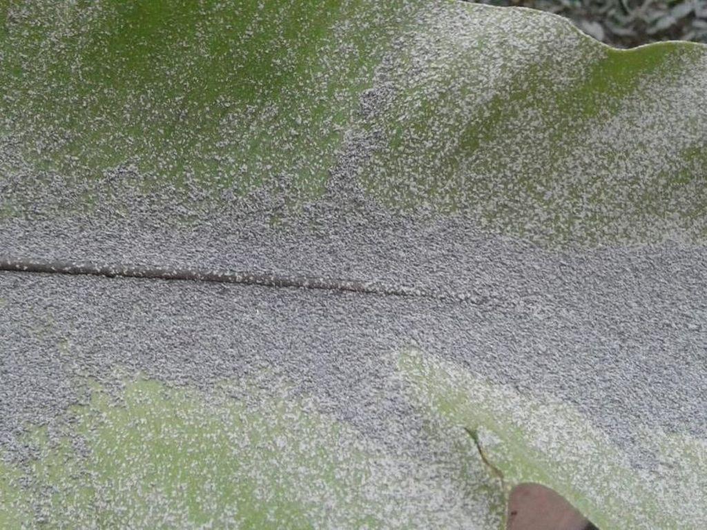 Foto: Hujan Abu Akibat Letusan Freatik Gunung Merapi