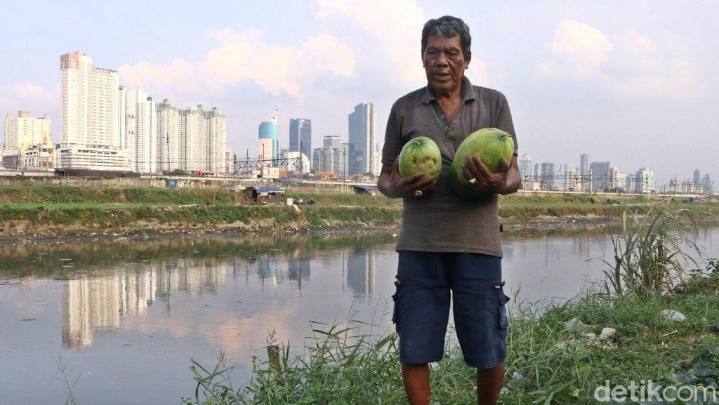 Jelang Ramadan Petani di BKB Panen Timun Suri