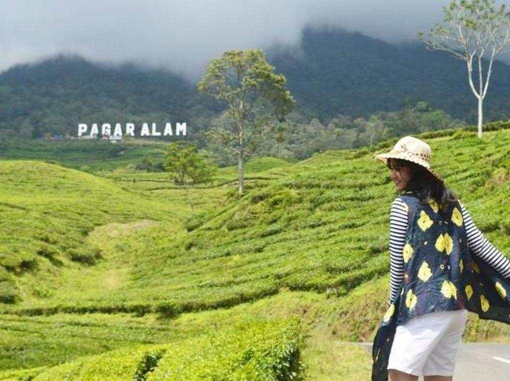 Yang Hijau-hijau di Pagaralam