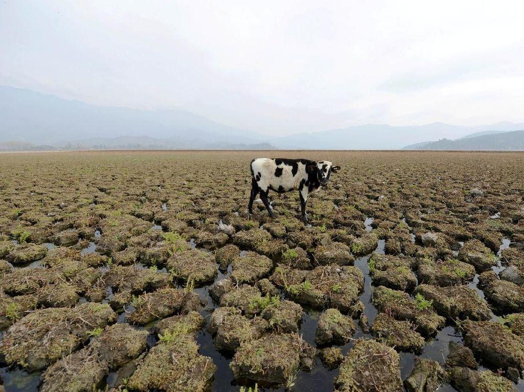 Suhu Semakin Panas, Bumi Terancam Kekeringan?