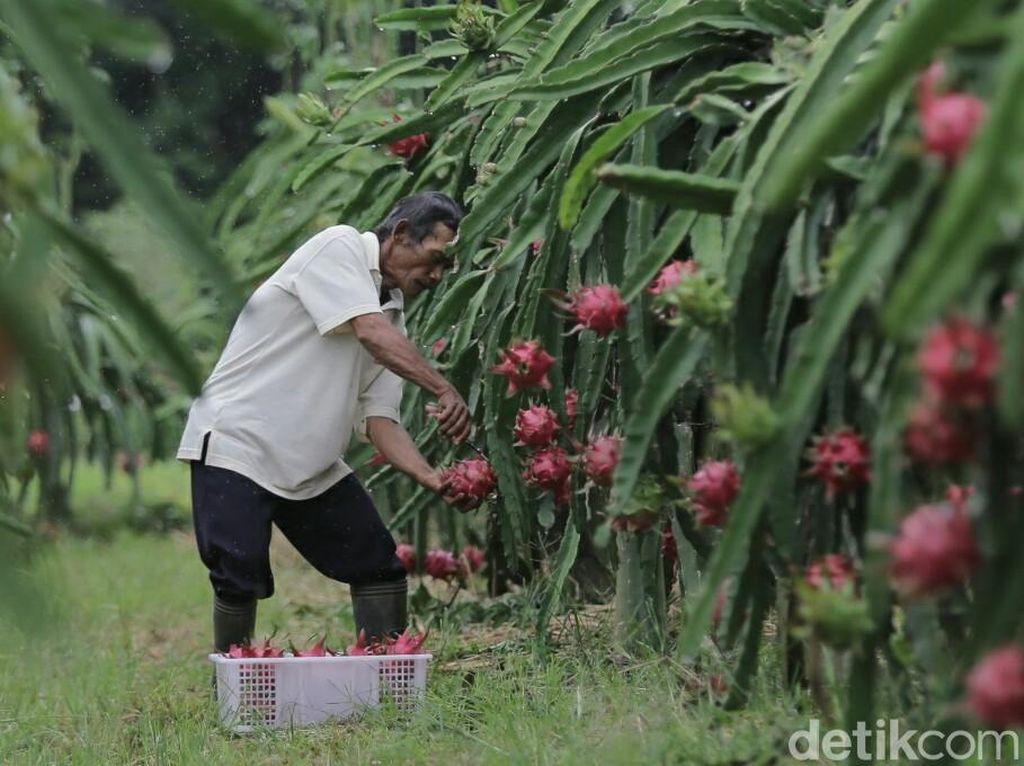 Strategi Pertanian Berwawasan Agrobisnis
