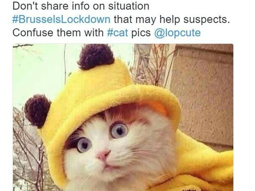 Foto: Belajar dari Belgia, Lawan Teror dengan Gambar Kucing Lucu
