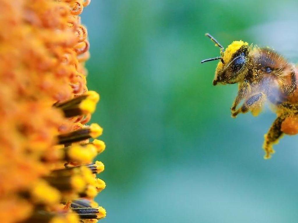 Robot Mata-Mata di Sarang Lebah Bantu Cegah Kepunahan