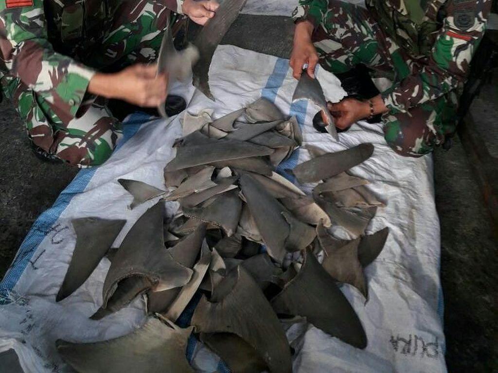 TNI Gagalkan Penyelundupan Sirip Hiu dari Papua Nugini
