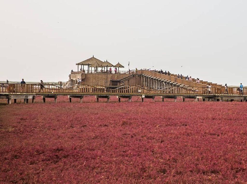 Foto: Pantai Berwarna Merah di China