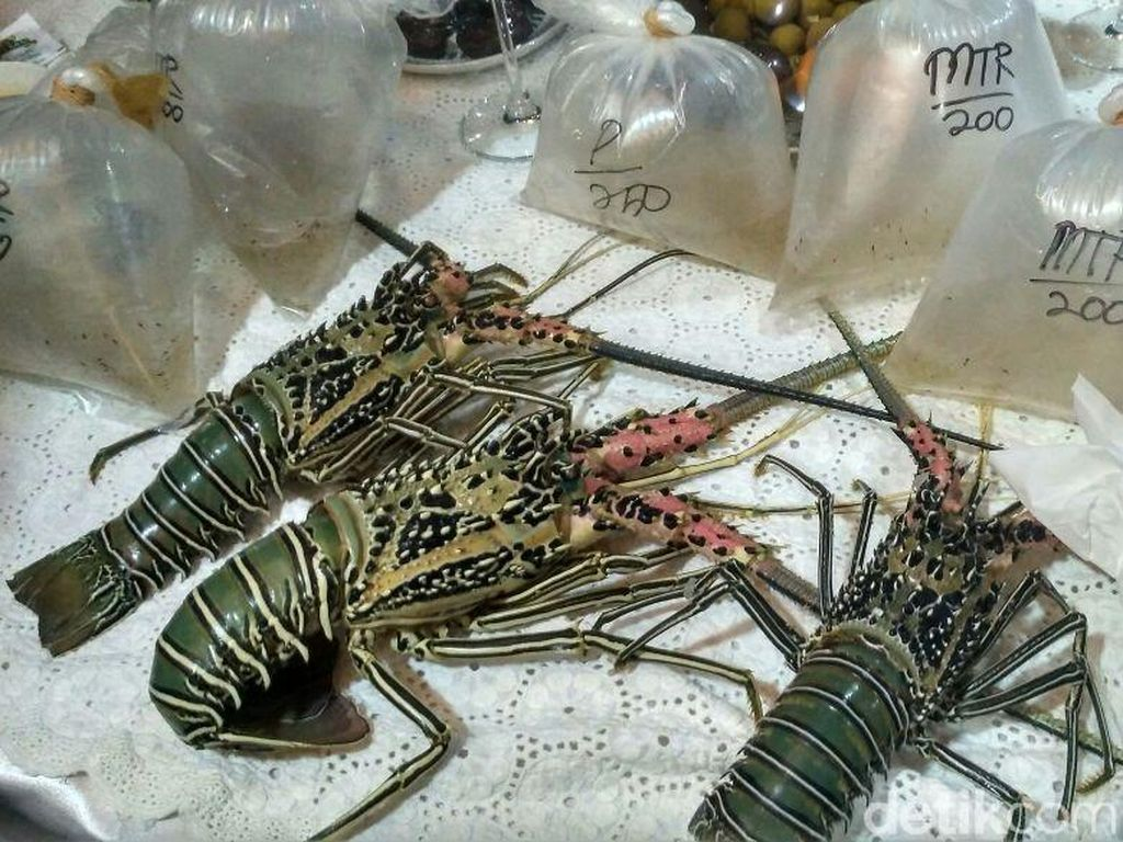 Kenapa Sih Lobster RI Diselundupkan Terus?
