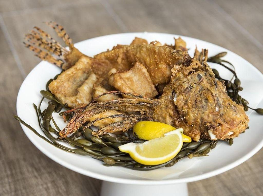 Chef José Andrés Sajikan Ikan Beracun Lionfish untuk Jaga Ekosistem Laut
