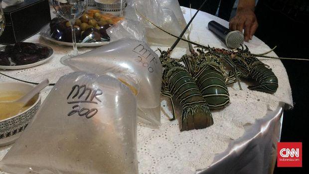 Benih Lobster Ilegal yang Disita oleh KKP. (CNN Indonesia/Tiara Sutari)