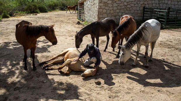 4 Manfaat Menunggang Kuda untuk Anak