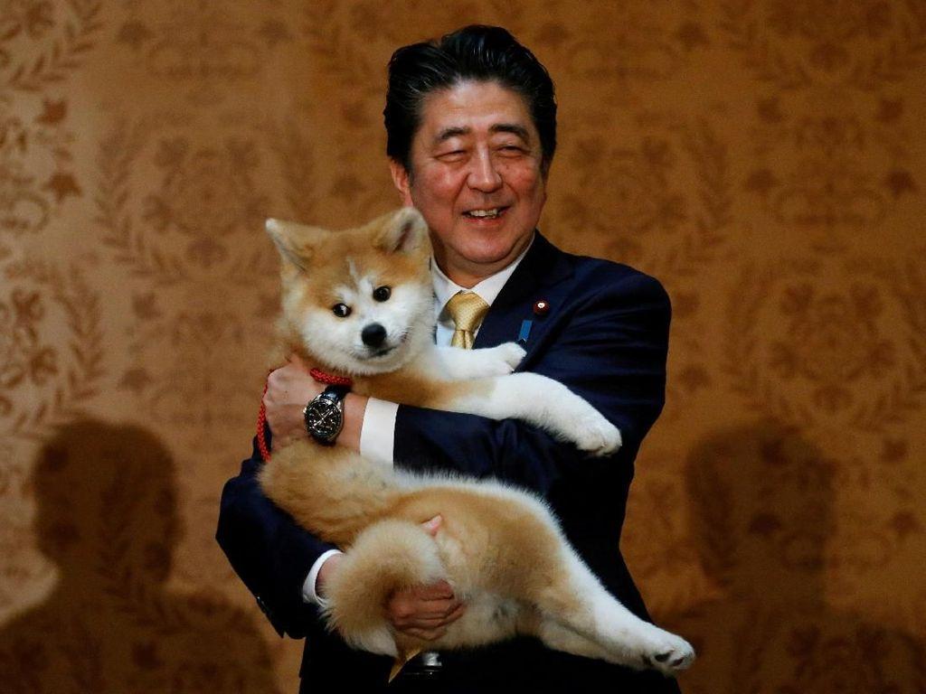 Sosok PM Jepang Shinzo Abe yang 2 Kali Mundur karena Sakit