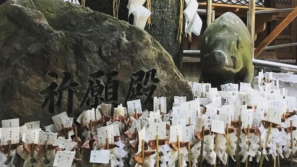Foto: Kuil Babi Hutan dan Mitos Cedera Kaki