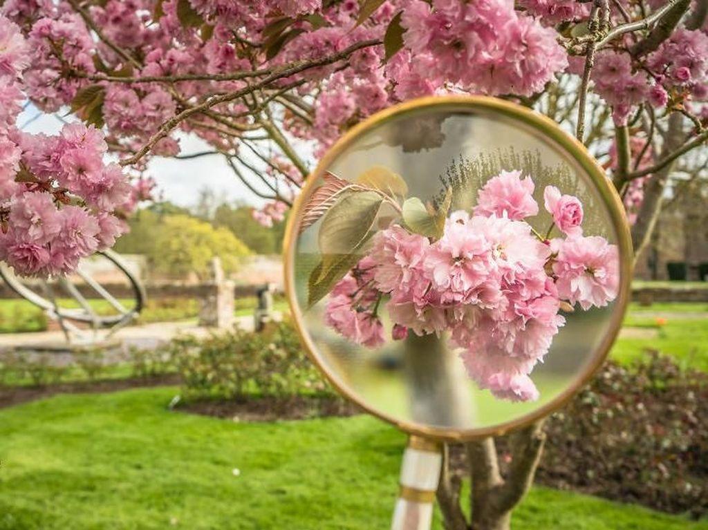 Memotret Keindahan Bunga Musim Semi melalui Kaca Pembesar