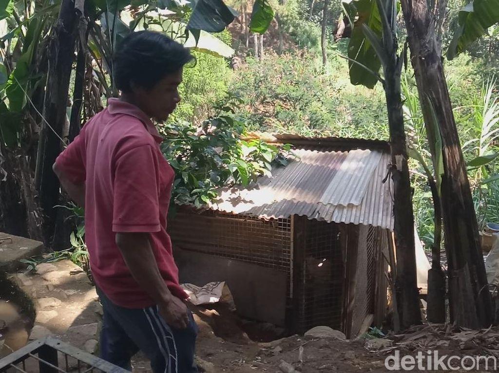 Cerita Warga yang Menemukan Macan Tutul Terjebak di Kandang Ayam