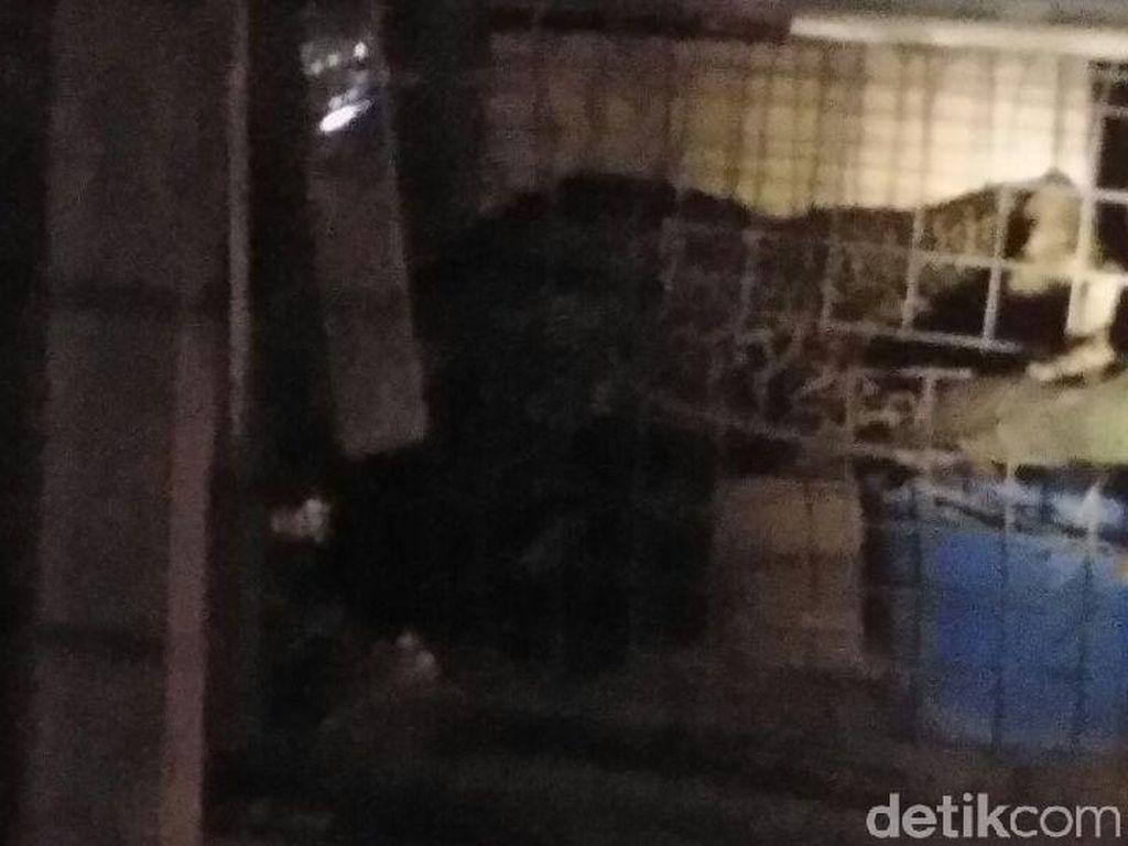 Turun Gunung, Macan Tutul Terjebak dalam Kandang Ayam di Pangalengan