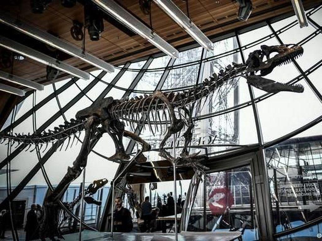 Kerangka Dinosaurus Misterius Terjual 2 Juta Euro pada Lelang di Paris