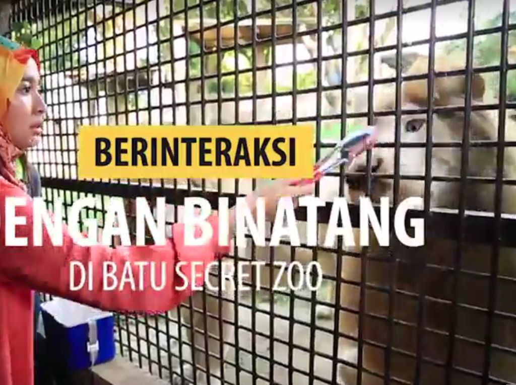 Berinteraksi dengan Binatang di Batu Secret Zoo