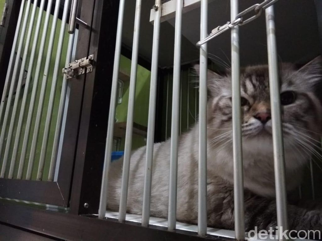 Mau Mudik Tenang? Titip Kucing di Sini Rp 75.000/Hari