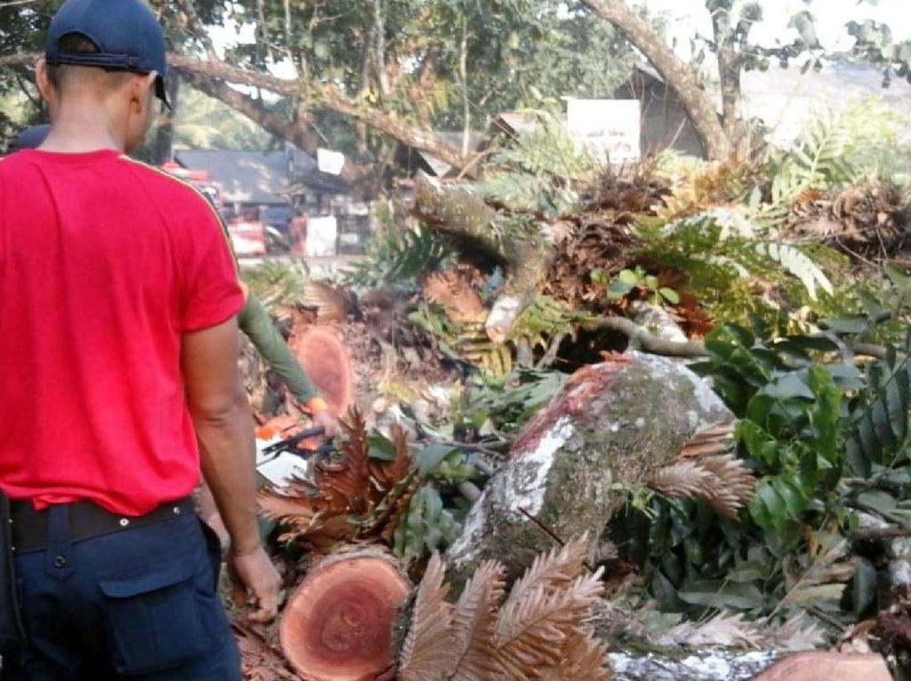 Pohon Tumbang Timpa 4 Orang di Palabuhanratu Sukabumi