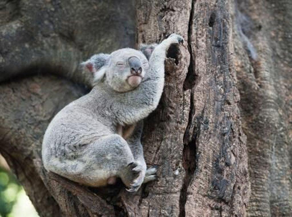 Begini Tingkah Menggemaskan Hewan Saat Tidur