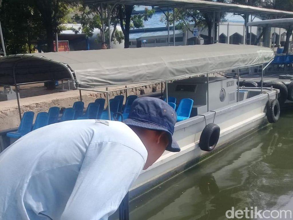 Kemunculan Buaya di Tanjung Priok Masih Sisakan Tanda Tanya