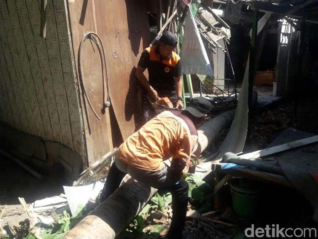 Berlebaran, Dua rumah di Situbondo Rusak Tertimpa Pohon Tumbang