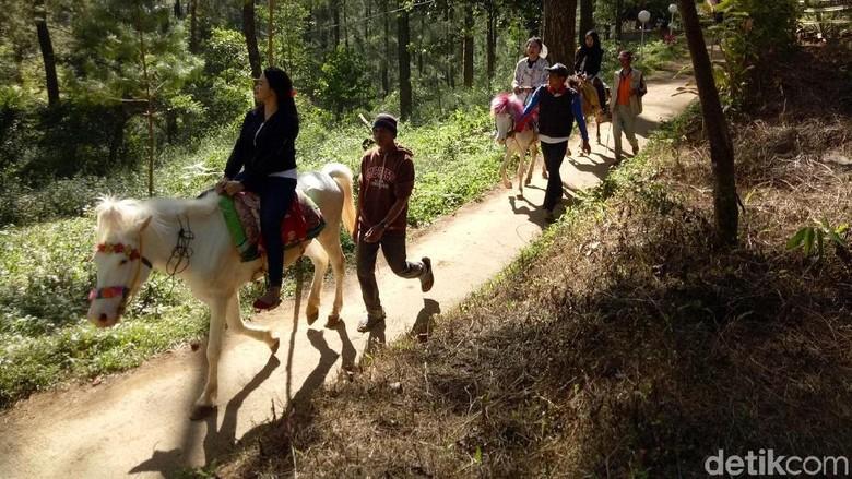 Wisata naik kuda di Taman Wisata Alam Malino (Ibnu/detikTravel)