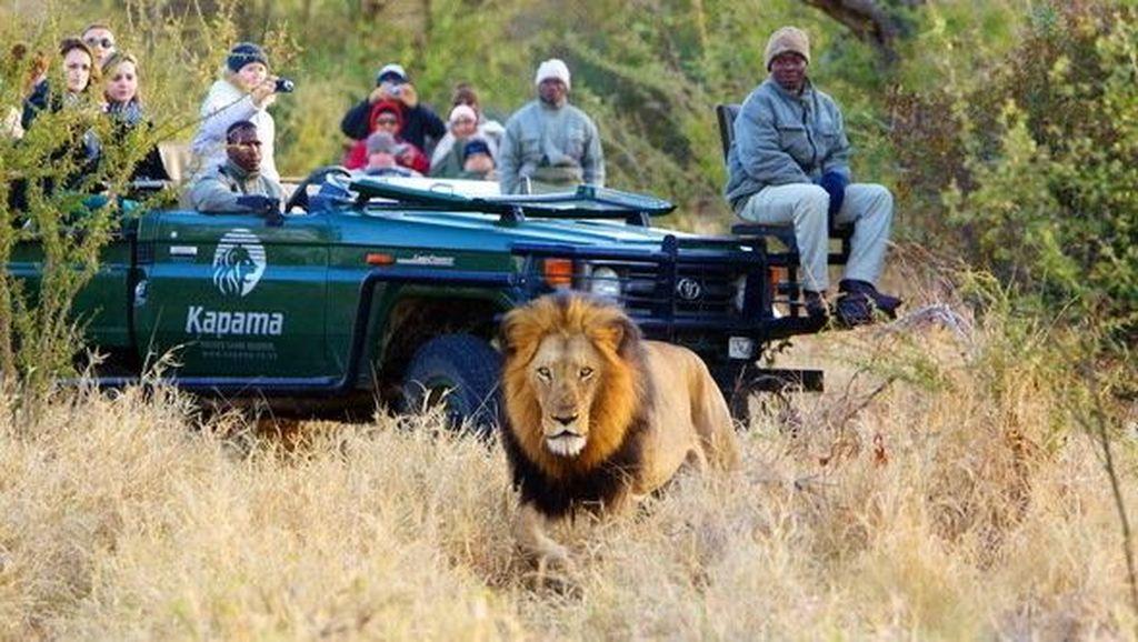 Kocaknya Patrice Evra Dikejar Singa