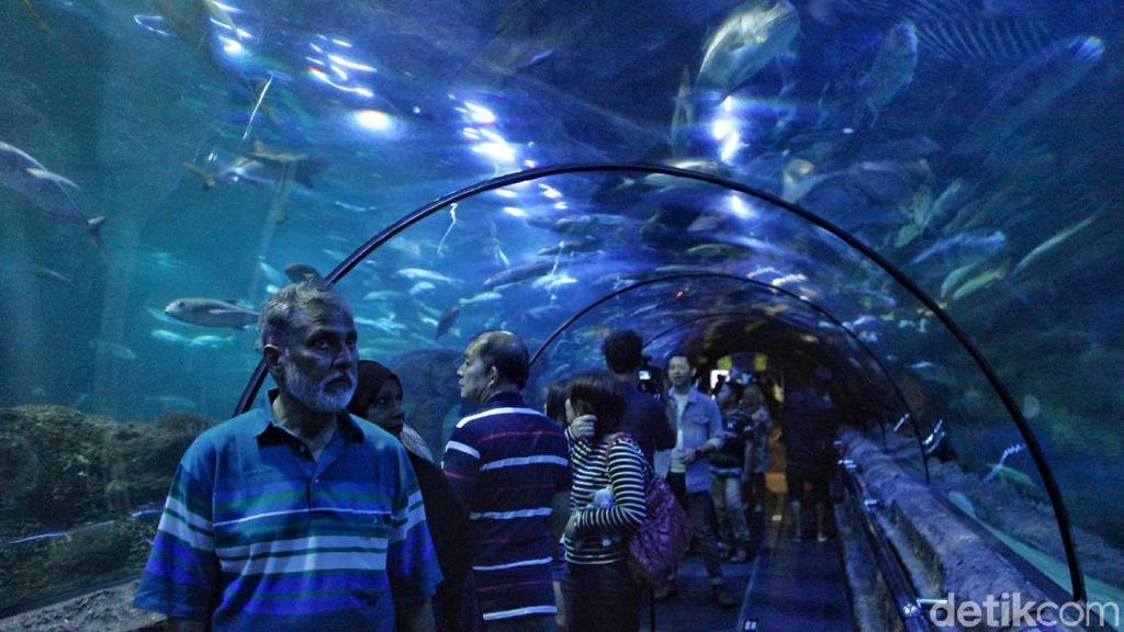 Seaworld Destinasi Wisata Favorit Warga Jakarta