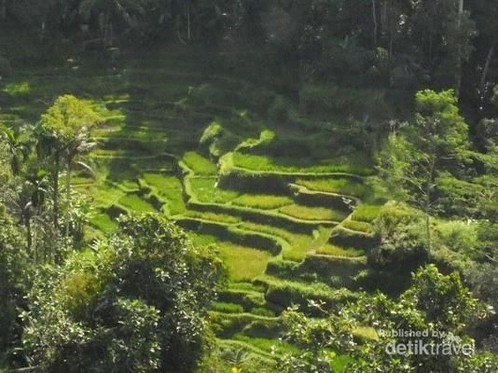 Ubud di Bali Juga Jadi Kota Terbaik Ketiga di Asia