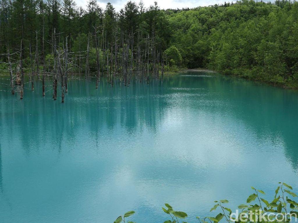 Tersihir Kolam Biru dan Taman Bunganya Hokkaido