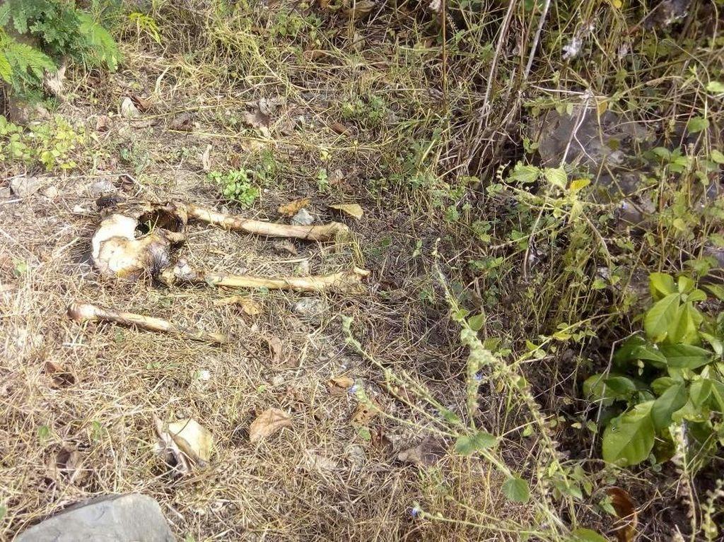 Tulang Manusia Berserakan Ditemukan di Hutan Banyuwangi
