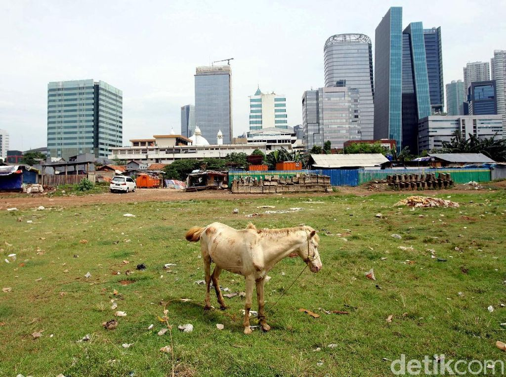 Melihat Perawatan Kuda Delman di Jakarta