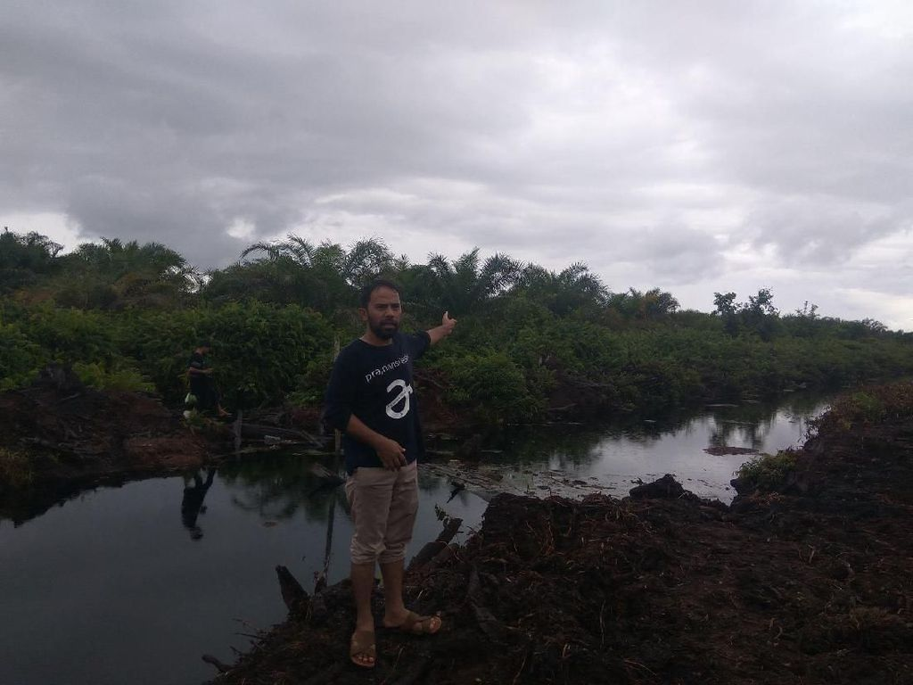 Foto: Lahan Kallista Si Pembakar Hutan yang Dihukum Rp 366 Miliar