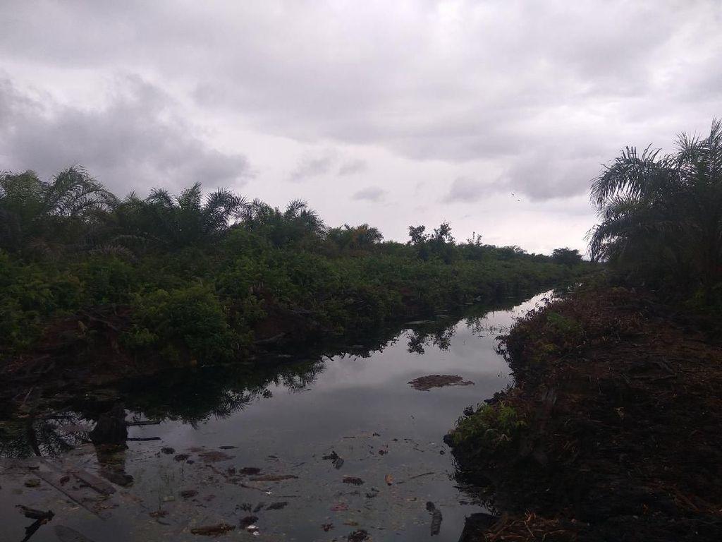 Pembakar Hutan Dihukum Rp 366 M, Walhi Sangsi Lahan Bisa Pulih
