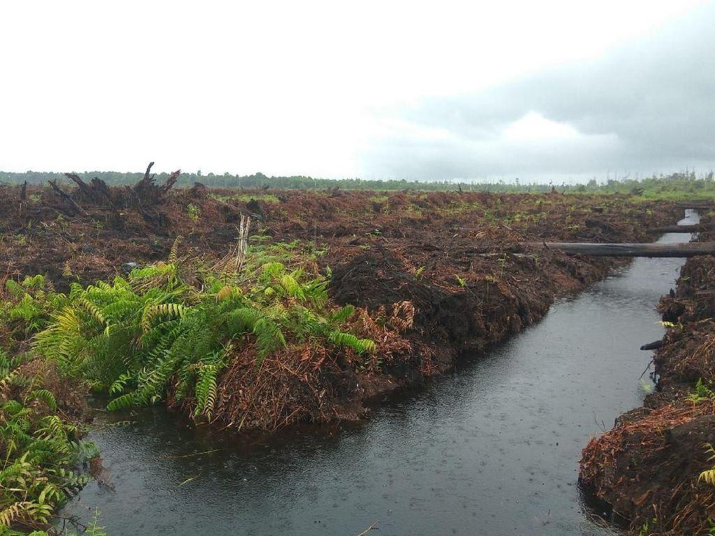 Pembakar Hutan Kembali Dihukum Rp 366 M Jadi Kemenangan Lingkungan