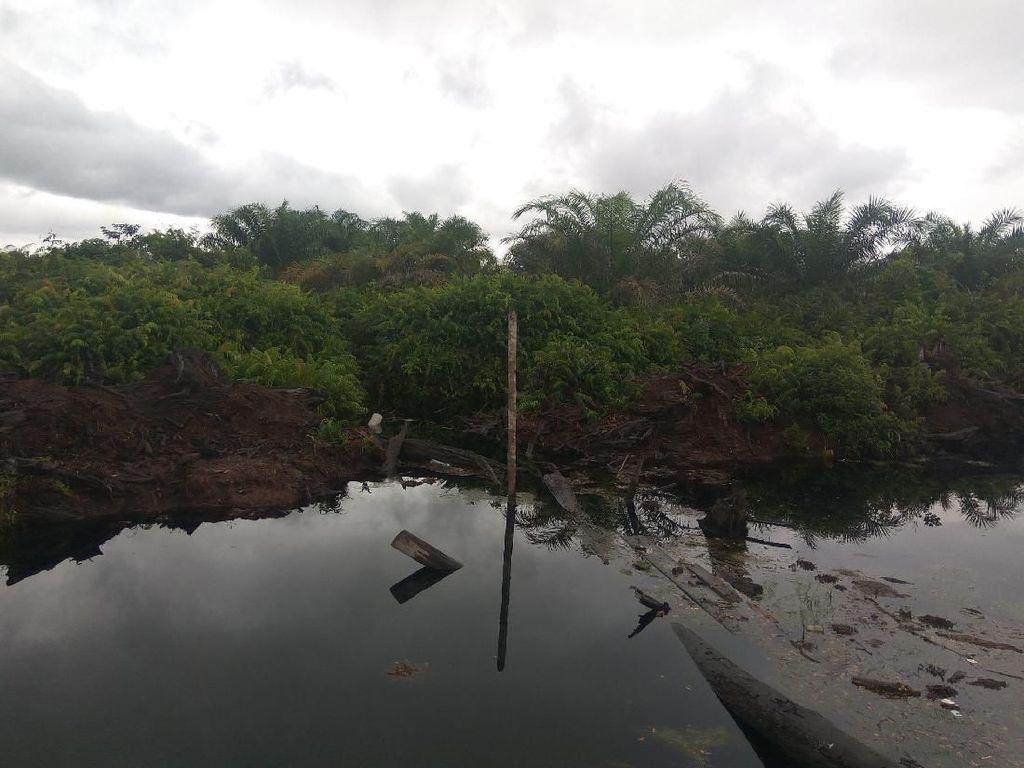 Kallista Didenda Rp 366 M, Lahan Sawitnya akan Dijadikan Hutan Lagi