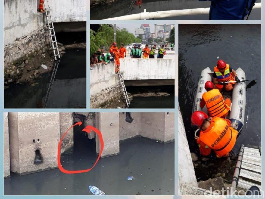 Buaya Ngumpet di Jembatan Grogol Masih Anak, Induknya Dicari