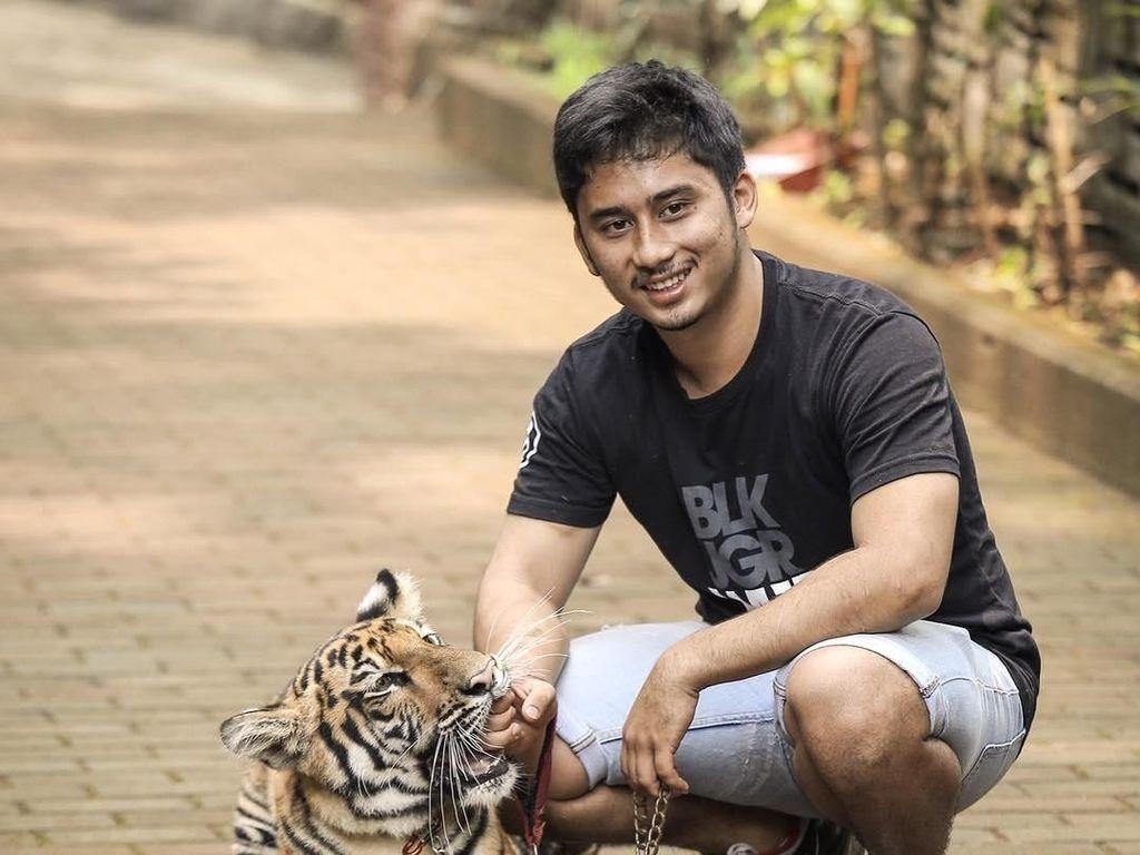 Cerita Sepupu Raffi Ahmad Berani Beri Makan Harimau Tanpa Alat Bantu