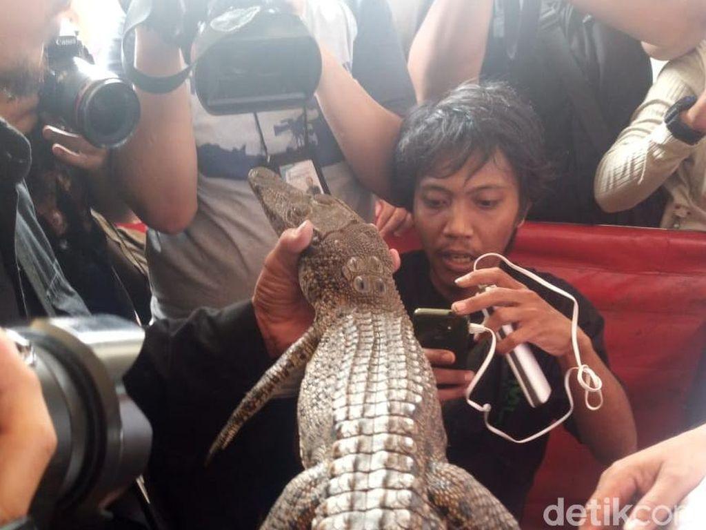 Warga yang Tangkap Buaya di Roxy Sedang Mancing Biawak