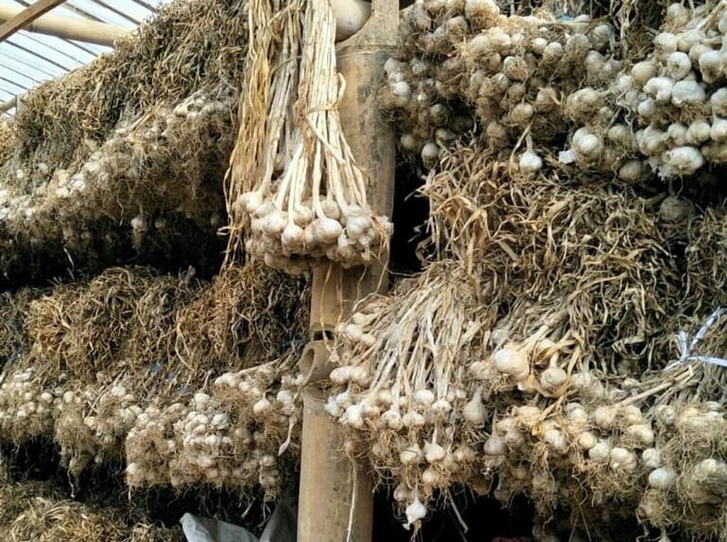 Mendag Batalkan Rencana Impor Bawang dari China