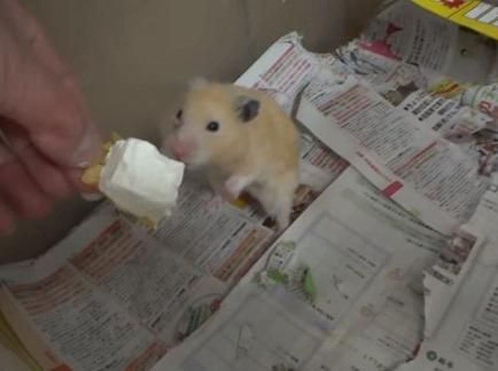 Unggah Video Hamster Makan Es Krim, Channel YouTube Ini Diserang Netizen
