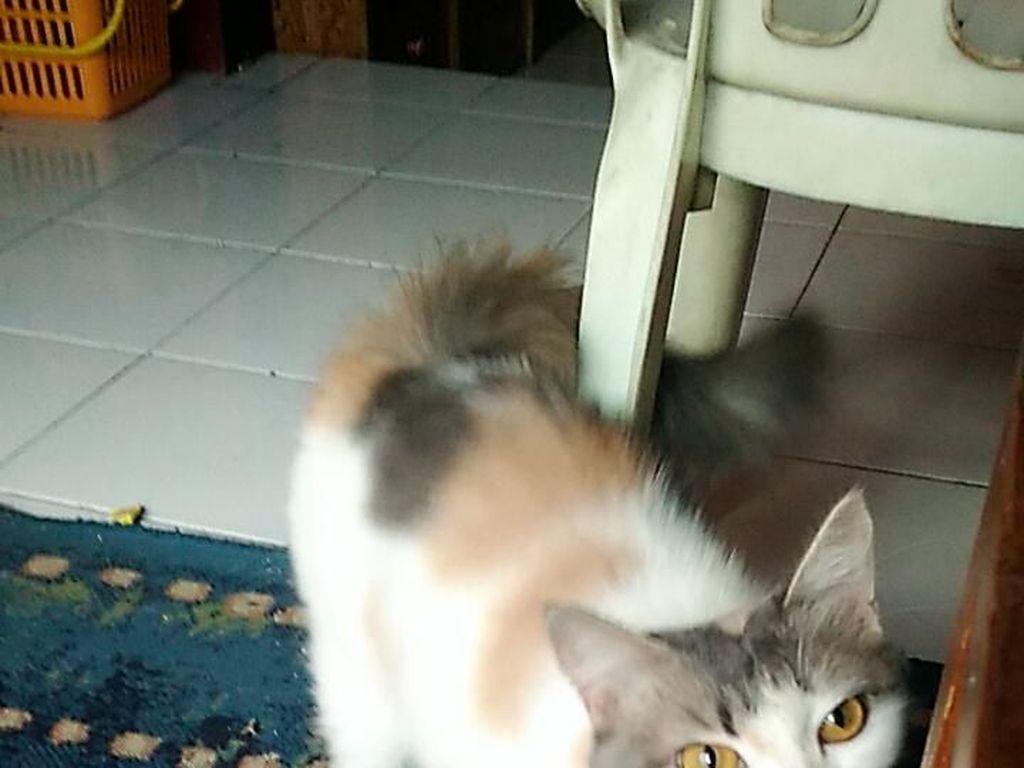 Ini Kucing Penyelamat Keluarga di Bandung dari Teror Ular