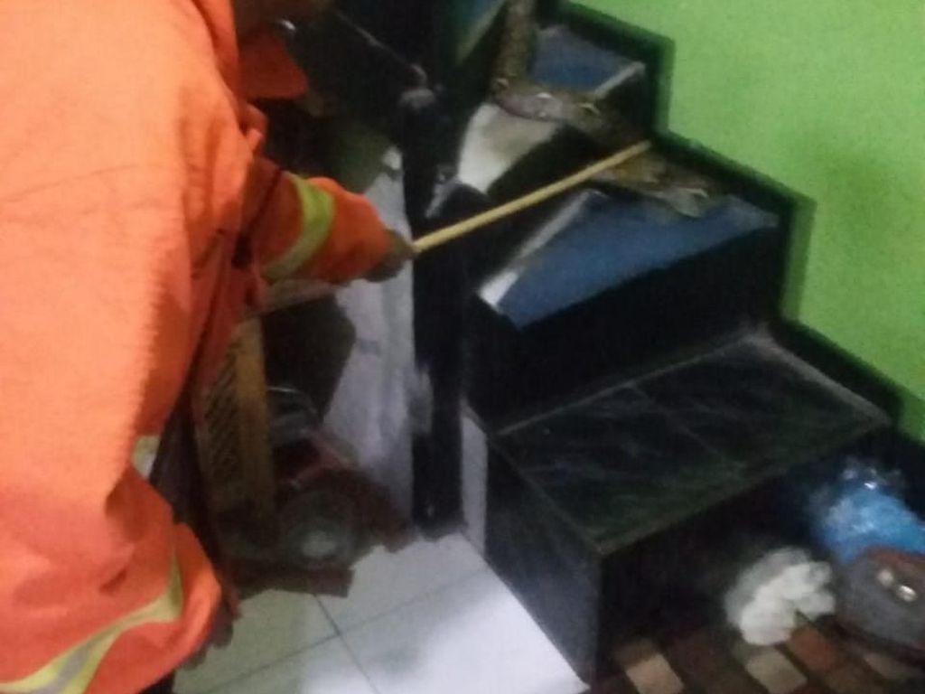 Cerita Petugas Tangkap Sanca yang Teror Keluarga di Bandung
