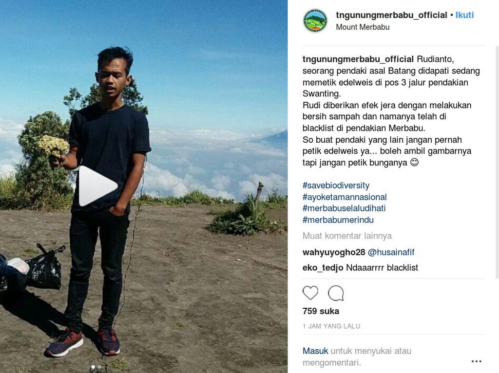 Peringatan Keras Bagi Pendaki Pemetik Edelweis di Gunung Merbabu